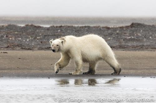 Gallery 4:southeast Svalbard