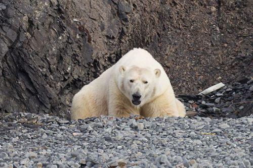 Day 1-6(Longyearbyen-Woodfjord)