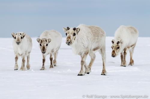 Spitzbergen (Svalbard)