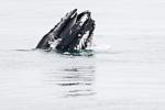 a7o_whalewatching_11juli15_126