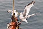 a7o_whalewatching_11juli15_383