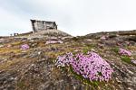 a8n_kongsfjord_21juli15_50