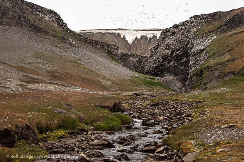Barentsøya: Büdelfjellet