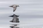 a7o_whalewatching_11juli15_045