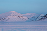 a8_Mohnbukta_07April14_363