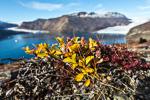 f8x_Harefjord_03Sept13_091