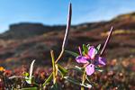 f8x_Harefjord_03Sept13_175