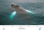 rz-spitzbergen-kalender-2017-a5-11
