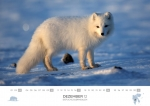 rz-spitzbergen-kalender-2017-a5-13
