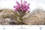 spitzbergen-kalender-2018-a3-05