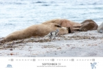 spitzbergen-kalender-2018-a3-10