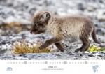 rz-spitzbergen-kalender-2019-a3-08