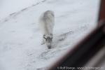 a1u_longyearbyen_30maerz15_06-jpg