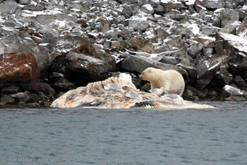 Tag 5 - Spitzbergens Nordwesten