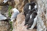 Spitzbergen, SV Antigua 02.-19. Juli 2012