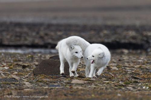 Spitzbergen - Osten