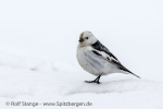 e5c_Longyearbyen_25Mai13_14