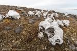 Tusenøyane: Spekkholmen