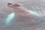 a7o_whalewatching_11juli15_309