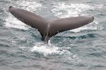 a7o_whalewatching_11juli15_487