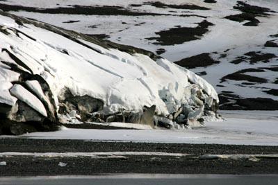 Spitzbergens Gletscher haben es eilig