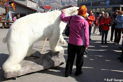Polar bears in Longyearbyen
