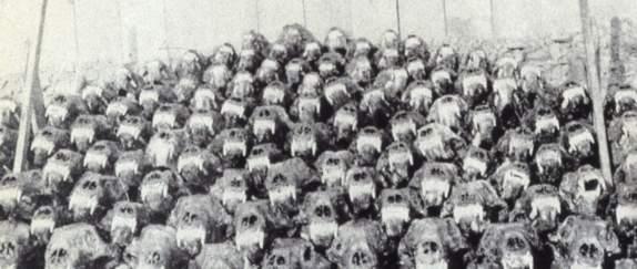 hodeskaller av isbjørn, Halvmåneøya