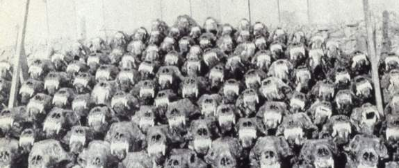 Polar bear skulls, Halvmåneøya