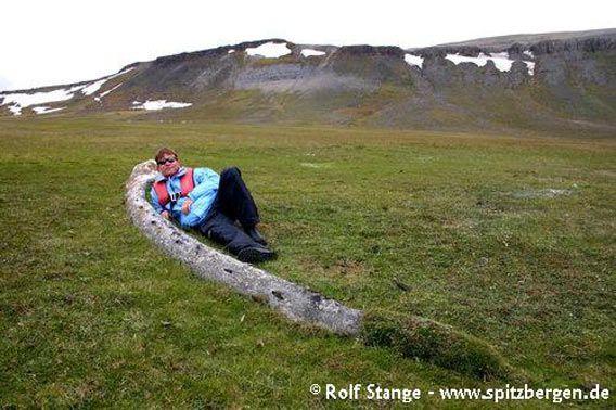 Whalebone in Rosenbergdalen, Edgeøya