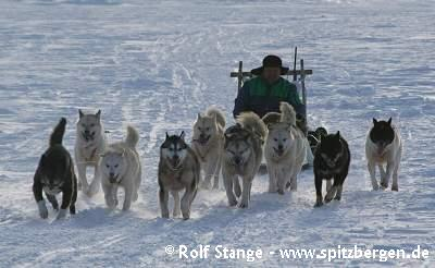 Hundeschlitten in Ostgrönland