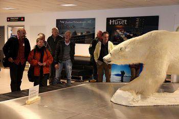 The very first polar bear of the season(Longyearbyen airport)