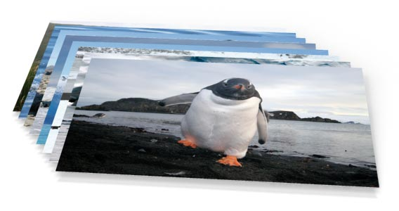 Postcard Set »Antarctica«