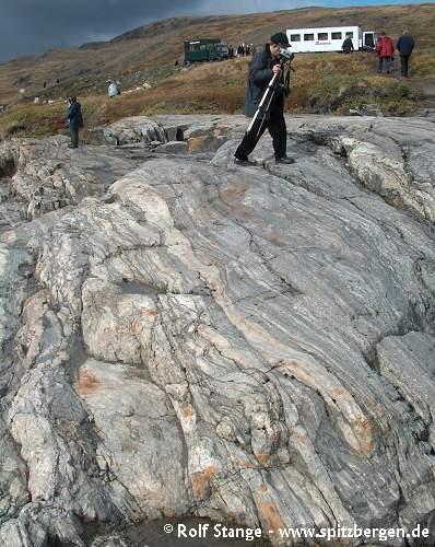 Gneiss (Kangerlussuaq, West Greenland)