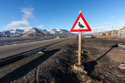 n_Eiderentenwarnschild_Longyearbyen