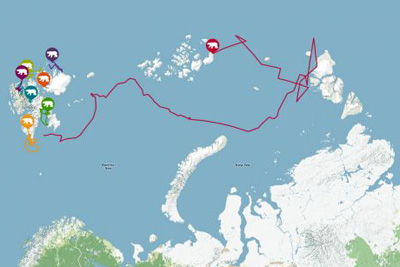 Migration of polar bear Kara