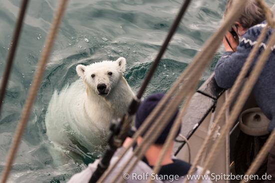 Eisbär und Antigua, Spitzbergen