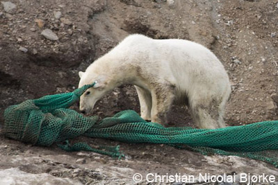 polar bear with fishing net