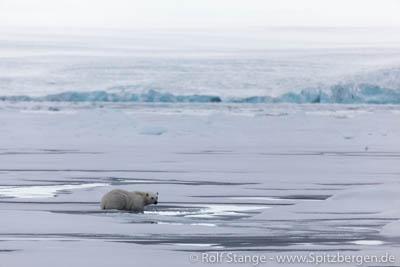 Nordost-Svalbard: Eis und Eisbär