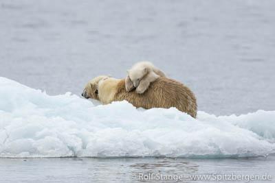 Eisbärenfamilie im Hornsund