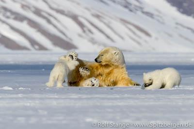 Norwegens arktischer Norden: Spitzbergen (Eisbär)