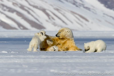 Eisbären Longyearbyen