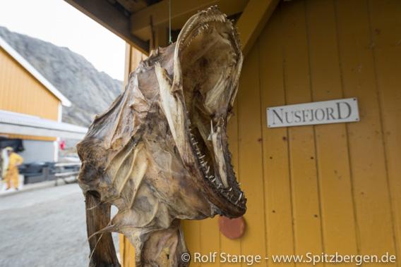 Nusfjord: Trockenfisch