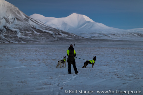 Polar night, Spitsbergen: hiking with dogs in Adventdalen