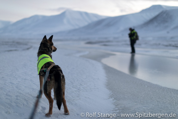 Polar night, Spitsbergen: hiking with dogs in Adventdalen - black ice!