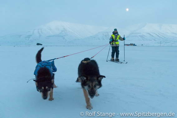 Moonlight tour with dogs in Adventdalen