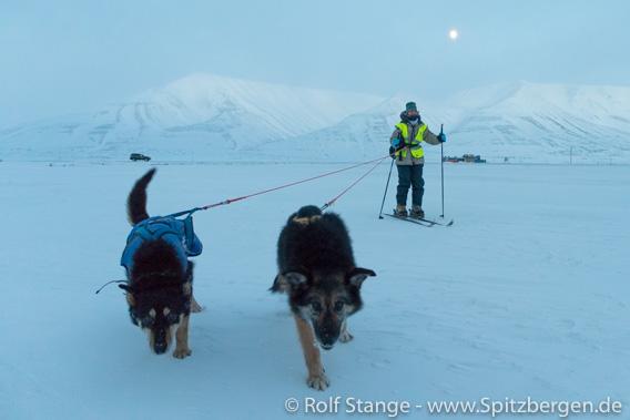 Mondscheintour mit Hunden im Adventdalen