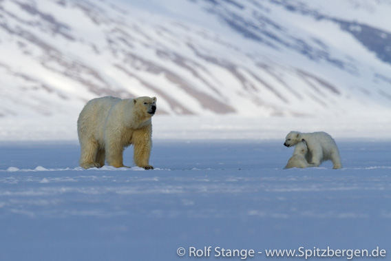 Habitat for seals and polar bears: fjord ice