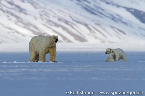 Lebensraum für Eisbären und Robben: Fjordeis