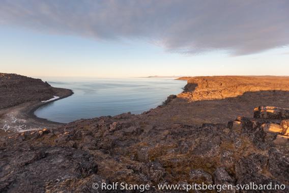 Kükenthaløya