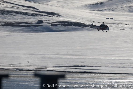 Sysselmannens helikopter og isbjørn